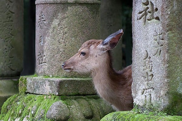 Nara: la ville des daims sacrés